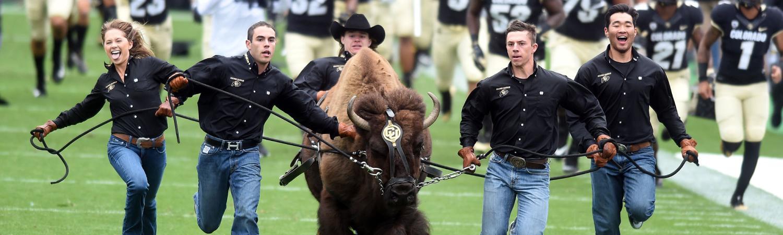 Ralphie handlers running with CU Boulder Buffs masot