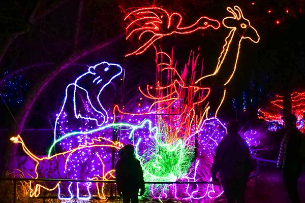 Colorful light displays in the shapes of animals at the Denver Zoo