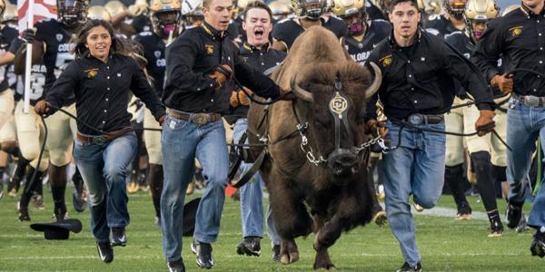 cu boulder students run with cu boulder buffalo mascot ralphie across folsom field