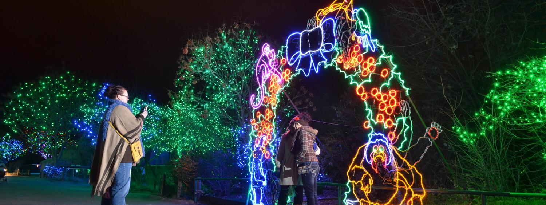 Zoo Lights animals