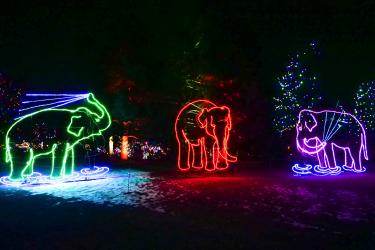 Zoo Lights elephants