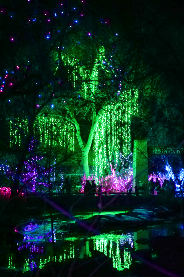 Zoo Lights green tree