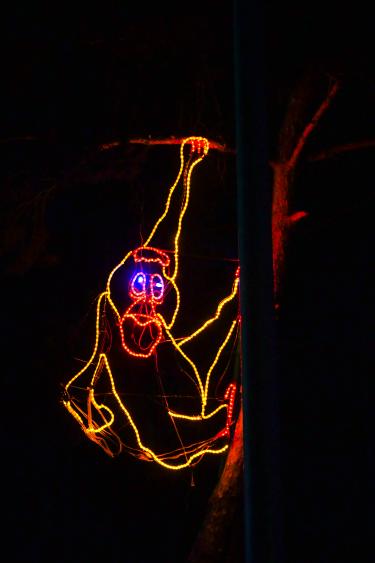 Zoo Lights orangutan