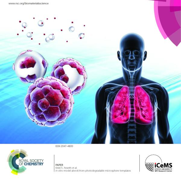 """Front Cover: K.J.R. Lewis, M.W. Tibbitt, Y. Zhao, K. Branchfield, X. Sun, V. Balasubramanian, and K.S. Anseth, """"In vitro model alveoli from photodegradable microsphere templates,"""" Biomaterials Science (2015)"""