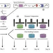 Dynamic loading schematic