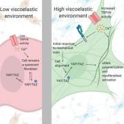 Macromolecular Bioscience 2020 Thumbnail