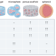 Engineering the MSC Secretome: A Hydrogel Focused Approach