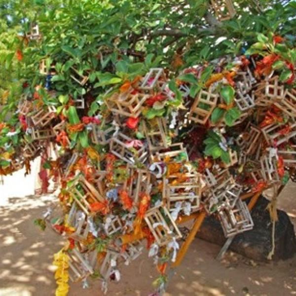 Sri Lanka tree art