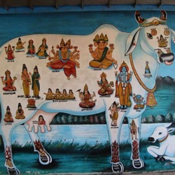 Sri Lanka cow painting