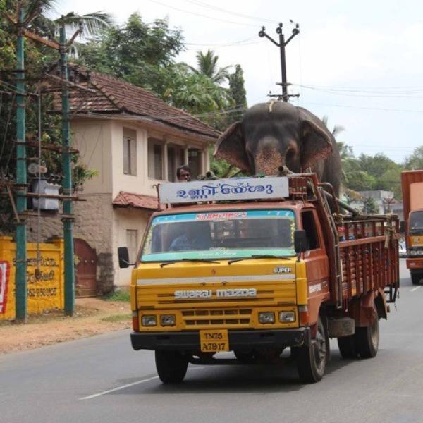 Elephant transportation truck