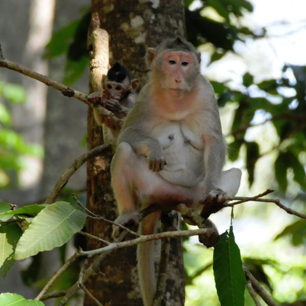 Mother and baby macaque