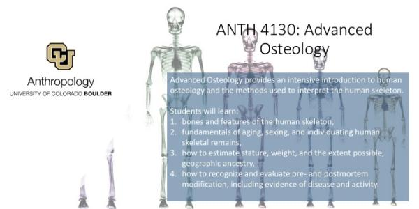 ANTH 4130- Advanced Osteology promo slide featuring skeletons