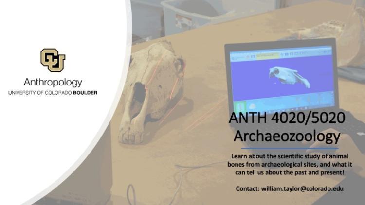 ANTH 4020 Archaeozoology Promo Slide