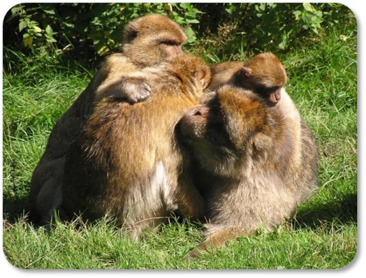 ANTH 3000 - Primate Behavior