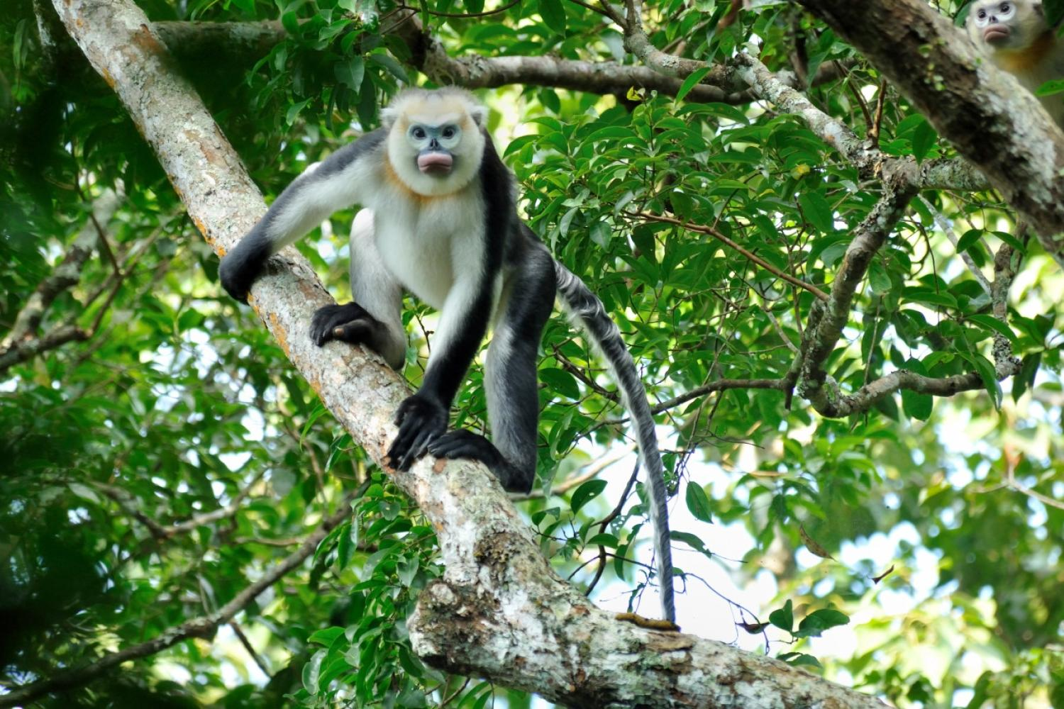 Monkey of some kind