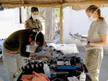 Michelle and Krista measuring lemurs (Photo/Frank Cuzzo)