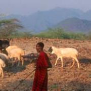 African Herdsman