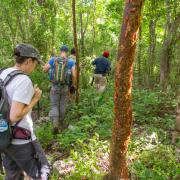 Sarah Kurnick hiking with team in the field