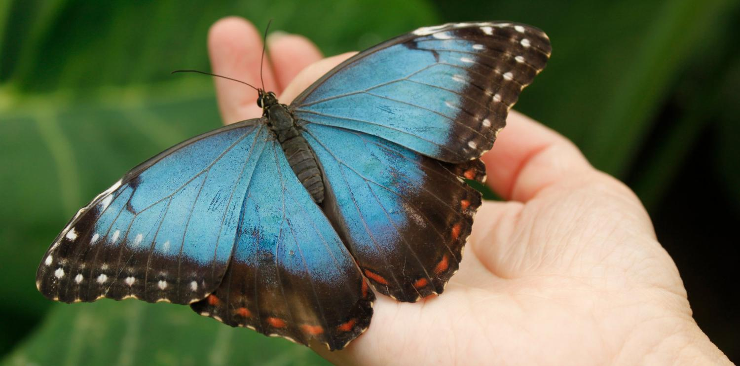 Photograph of someone holding a butterfly