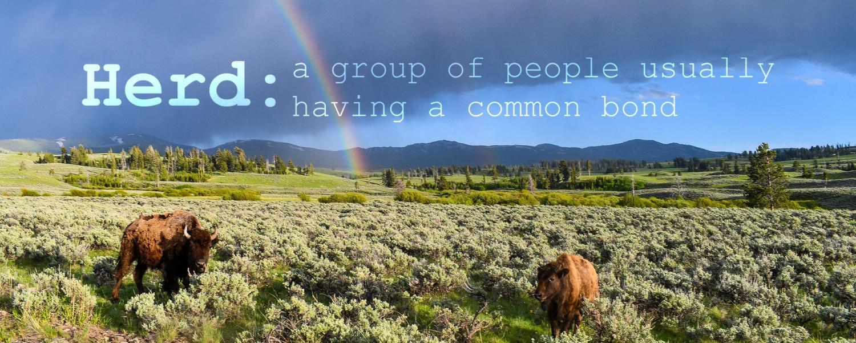 Herd Health definition