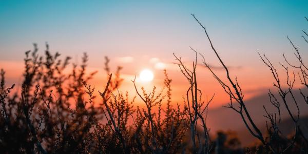 Sun rising over a field