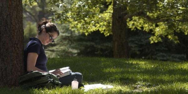 Student studying beneath a tree.