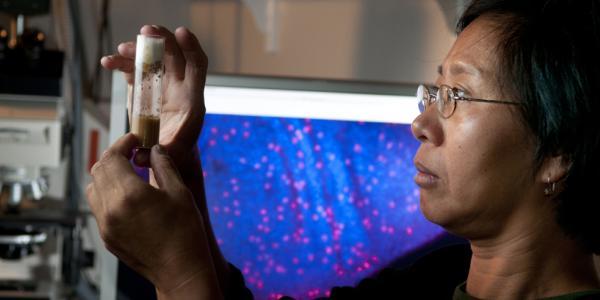 MCDB Professor looks at her experiment.