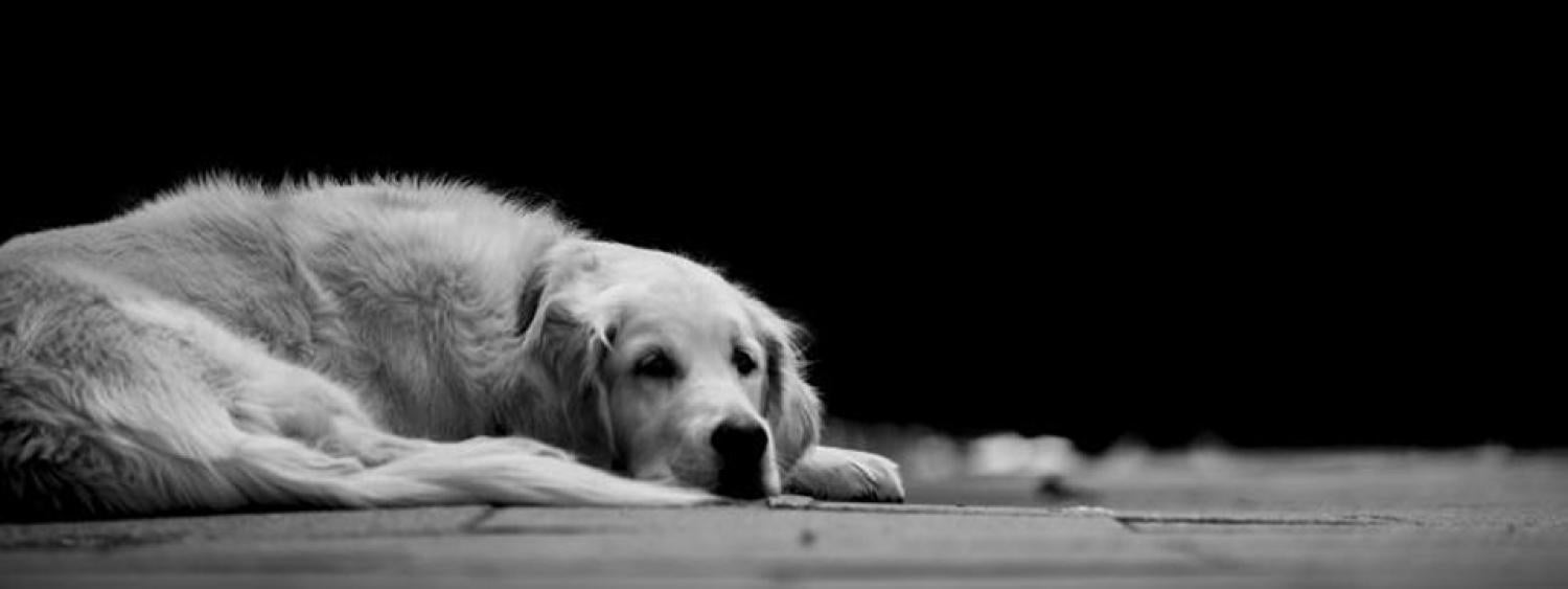 Black and white photograph of a dog laying on the ground