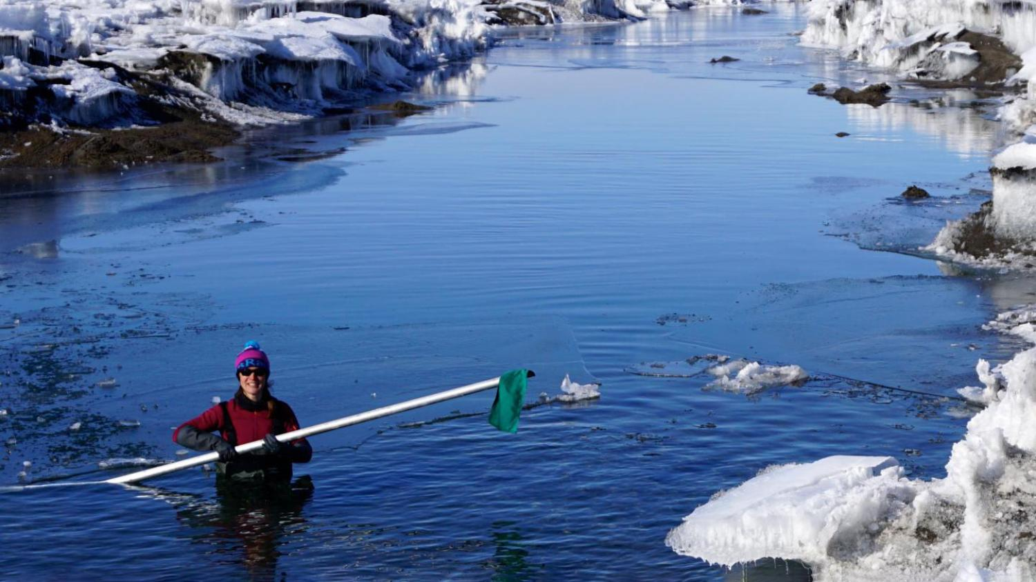 Alison Banwell wades through a meltwater pond in Antarctica
