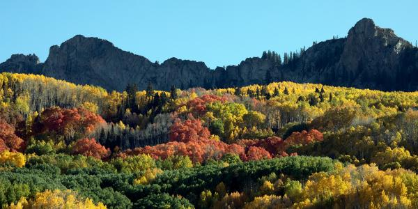 Clones of aspen with striking colors above Horse Park Ranch