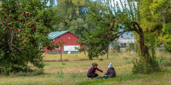 Apple orchard in Boulder, CO