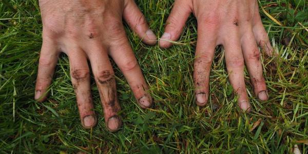 Stock photo of hands in the dirt