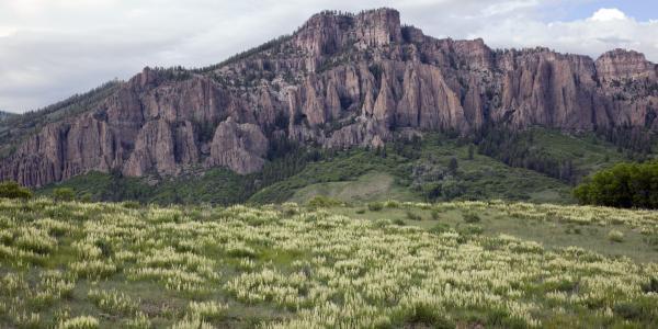 Virtually free of herbivory, locoweed flourishes beneath the needles of Soap Creek.