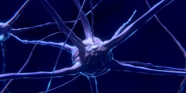 Stock image of a neuron