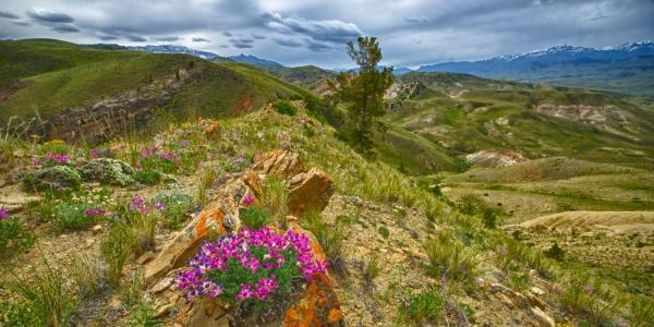 Pink Flowers on Ridge