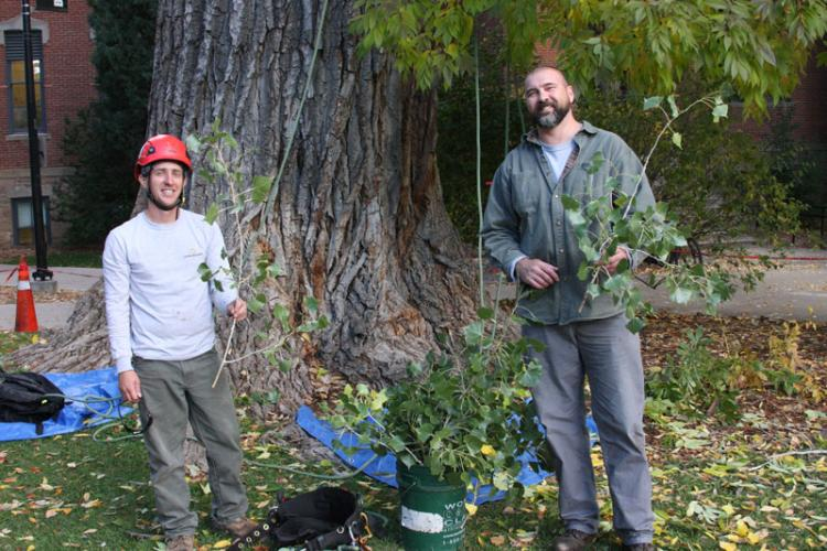Joel Serafin and Vince Aquino, arborists