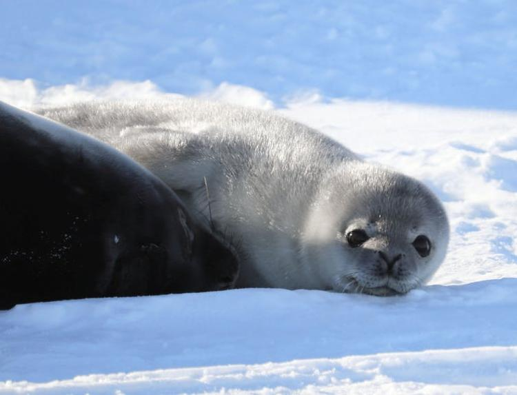 Currently, the world's largest marine protected area is in the Ross Sea region off Antarctica. Natasha Gardiner, CC BY-ND
