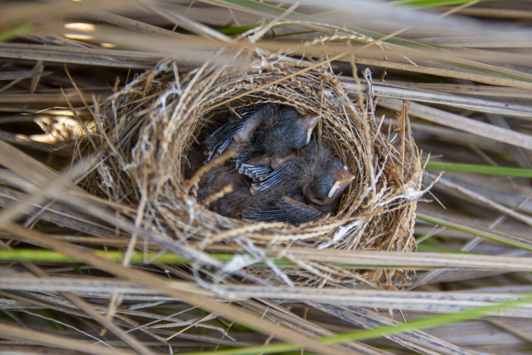 Birds in a small nest