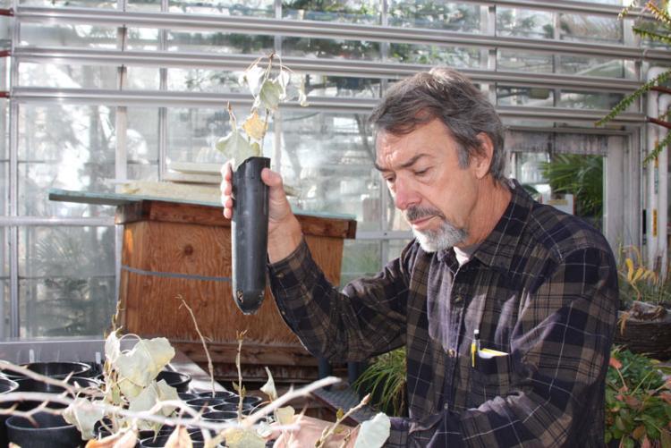 Tom Lemieux, manager of the CU-Boulder greenhouse
