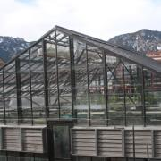 The greenhouse on the roof of the Ramaley Biology building is partly obscured from view at ground level. Up on the roof, it enjoys the full benefit of those famous 300 days of Boulder sunshine annually. Photo by Laura Kriho.