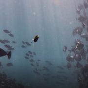 Fish in murky water