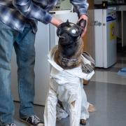 Xenna, a service dog, in her lab approve protective gear.