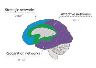 Diagram of the human brain highlighting the strategic, affective, and recognition networks -- the how, why, and what of learning.