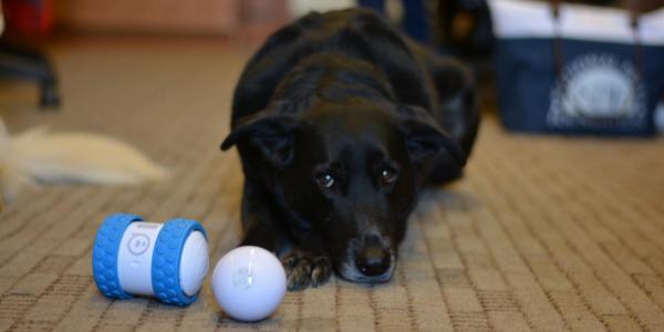 Dog with Sphero toys