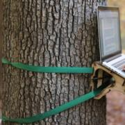 laptop stand that straps to a tree