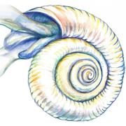 marine microorganism