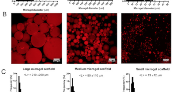 Generation of varied porous scaffolds using clickable microgel building blocks