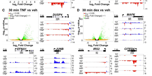 Primary transcriptional effects of TNF and glucocorticoids determined by GRO-seq.