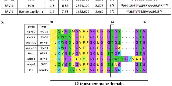 Identification of the conserved phospho-acceptor site T62 in HPV-16 L2 capsid protein using mass spectrometry analysis.
