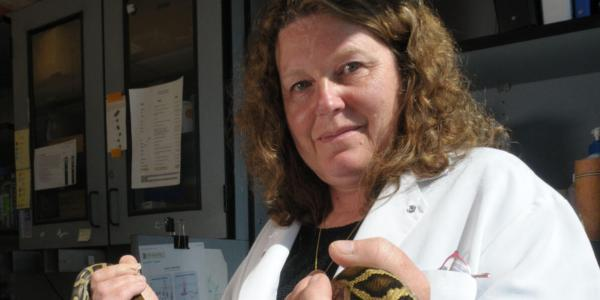 Leslie Leinwand carrying a Python